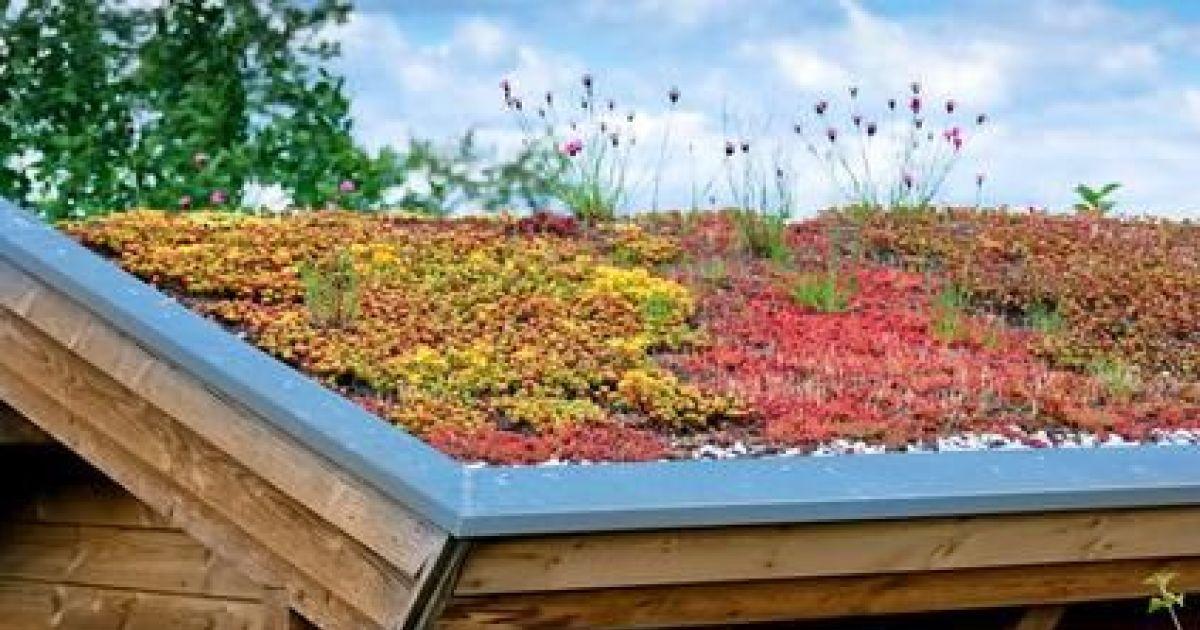 Le toit v g tal verdure plantes et fleurs sur un toit for Toit terrasse vegetal