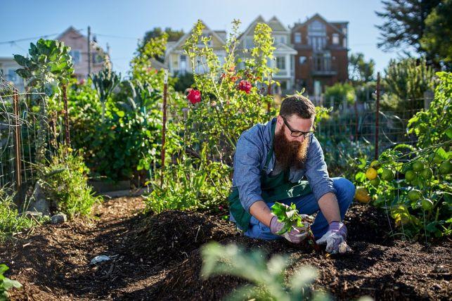 Le top 10 des fruits et légumes simples à cultiver