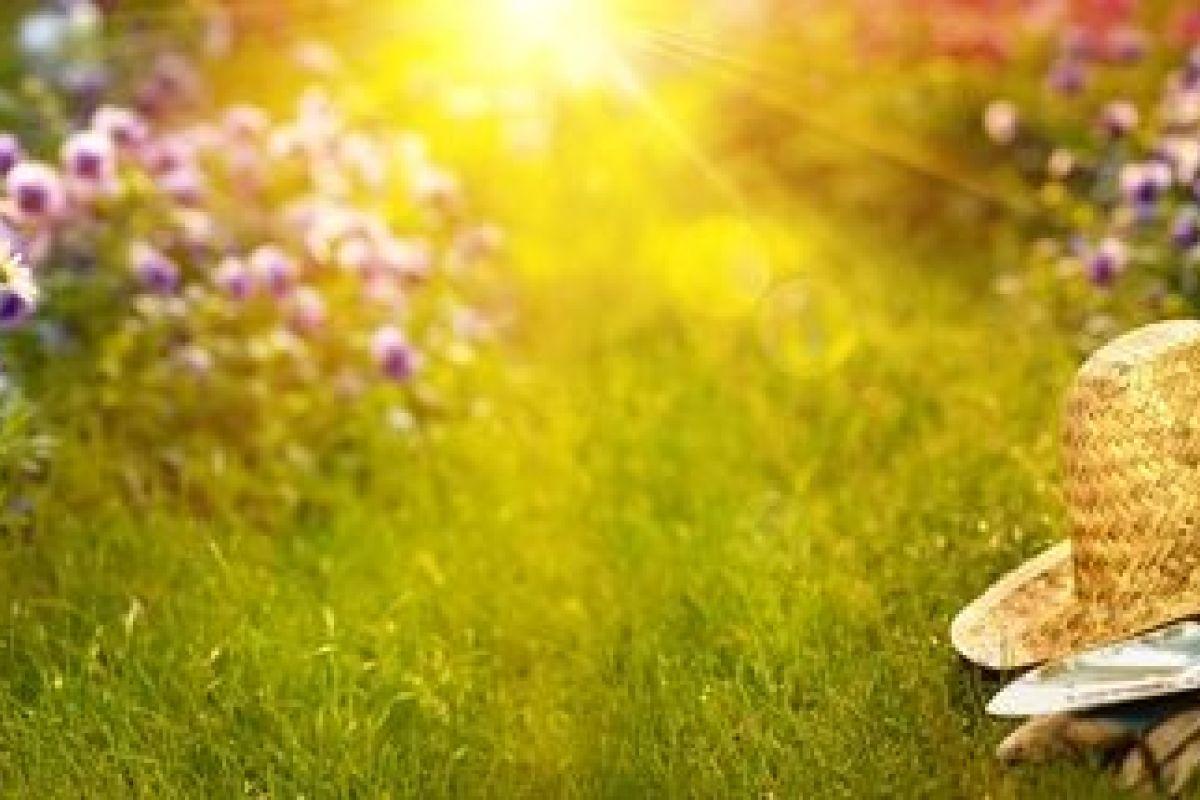 Plante Couvre Sol Soleil le top 10 des plantes couvre-sol pour un parterre de fleur
