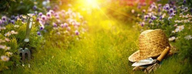 Le top 10 des plantes couvre-sol