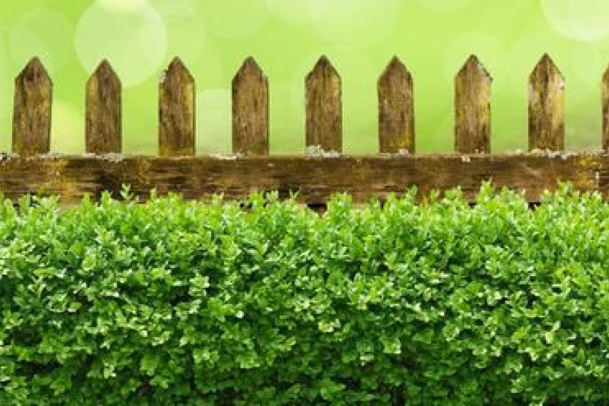Arbuste Pour Terrain Calcaire les arbustes pour haies : lesquels choisir, comment les