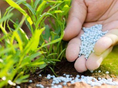 Les engrais chimiques pour jardin : les dangers