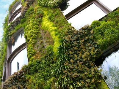 Les façades végétales