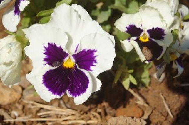 Les fleurs d'automne pour jardinières