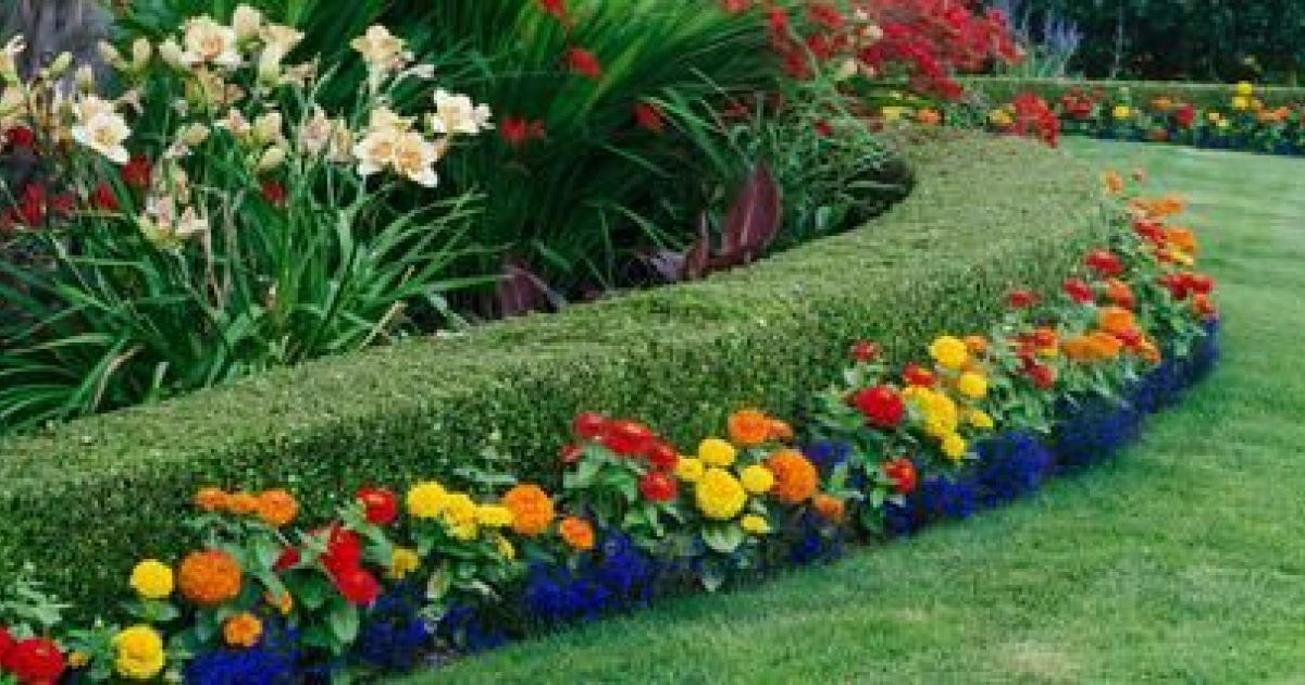 Les clôtures en haies fleuries pour un style champêtre et naturel