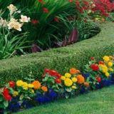 Les haies fleuries pour un style champêtre et naturel