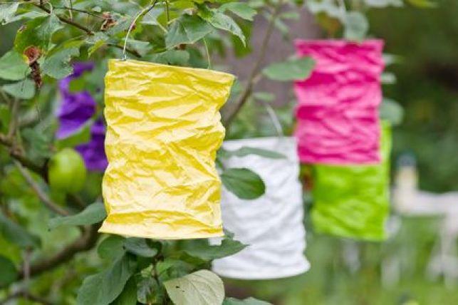 Les lampions : une idée pour éclairer votre jardin et créer une ambiance cosy