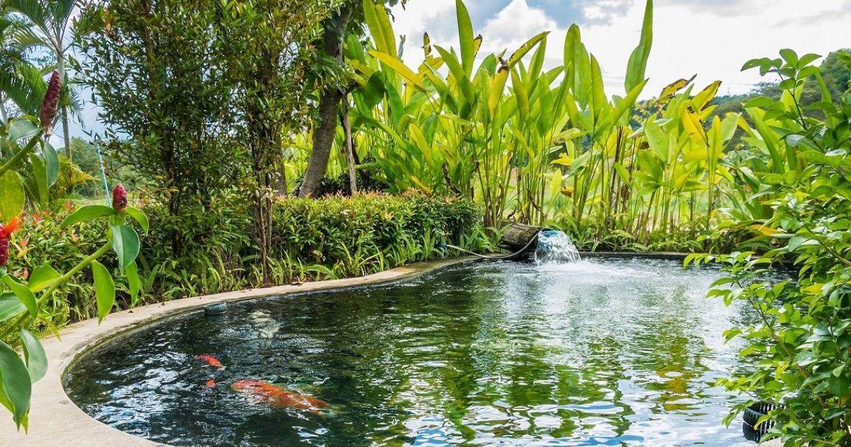 Les plantes aquatiques pour bassin de jardin - Plantes aquatiques pour bassin de jardin ...