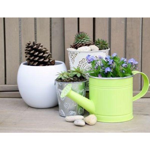 Les plantes d int rieur faciles d entretien - Grande plante d interieur facile d entretien ...
