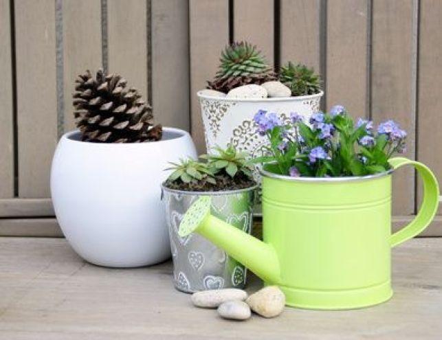Les plantes d'intérieur faciles d'entretien