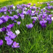 Les plantes et fleurs vivaces