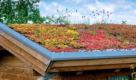 Les traitements antimousses pour toiture