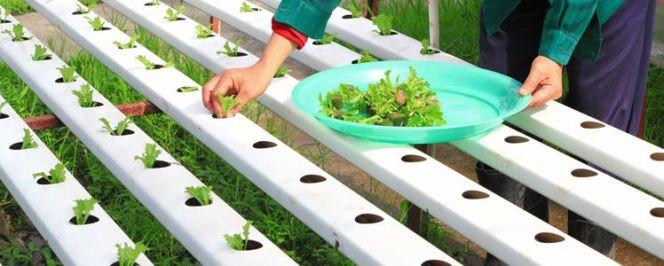 Méthode de jardinage : la culture aéroponique