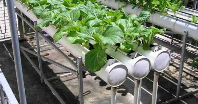 Méthode de jardinage : la culture hydroponique