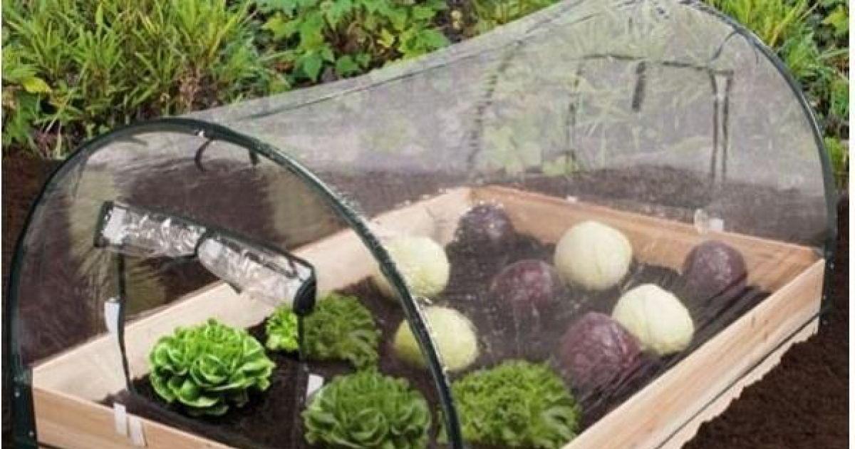 Les Mini Serres De Jardin Serres De Petites Tailles