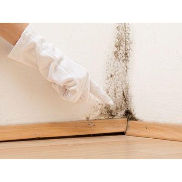 Moisissures et taches d humidit sur papier peint - Comment enlever de la moisissure dans une douche ...