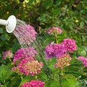 Période de vacances : à qui confier l'entretien de son jardin?