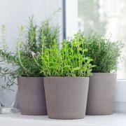 Pourquoi est-il bon d'installer des plantes dans une maison?
