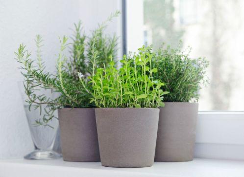 Pourquoi est-il bon d'installer des plantes dans une maison ?