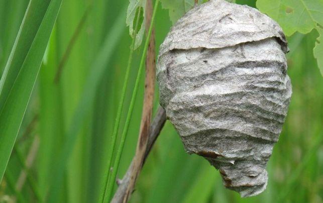 Prix pour enlever un nid de guêpes
