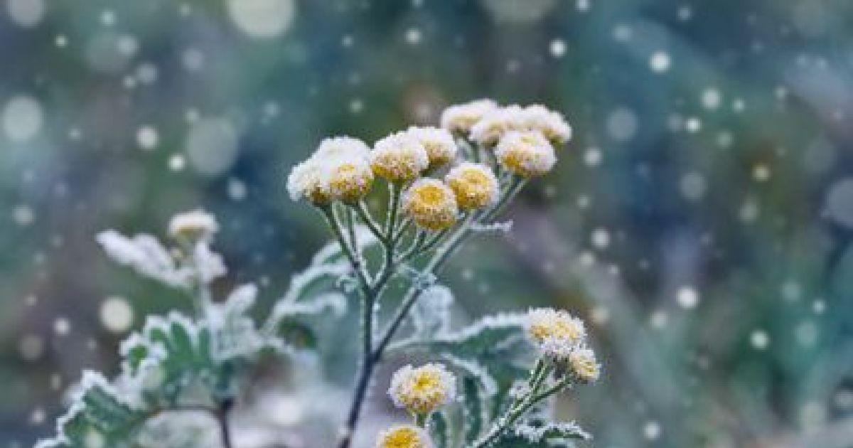 Prot gez vos plantes en pot l arriv e de l hiver for Entretien du jardin en hiver