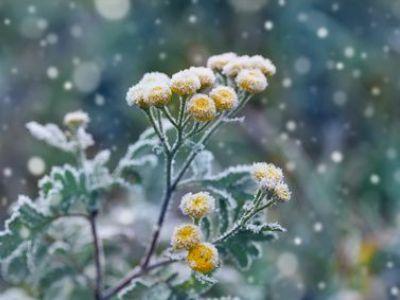 Protégez vos plantes en pot à l'arrivée de l'hiver