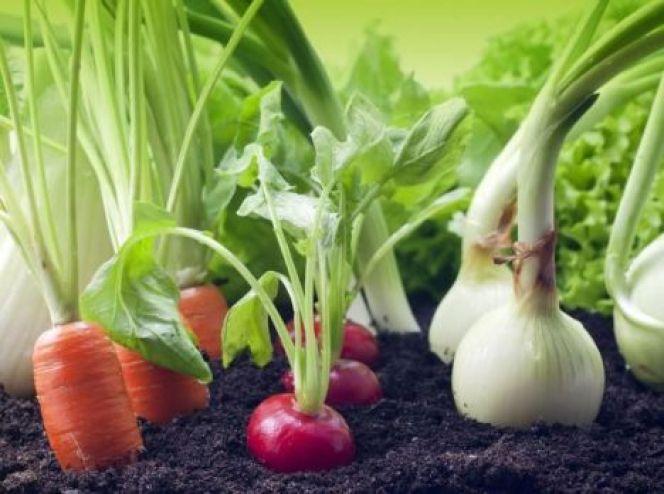 Que cultiver sous une serre de jardin ?