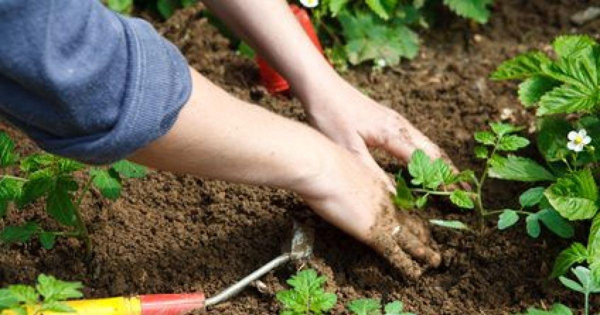 Que Faire Des Mauvaises Herbes Dans Son Jardin