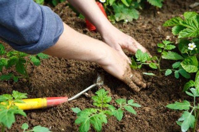 Que faire des mauvaises herbes dans son jardin ?