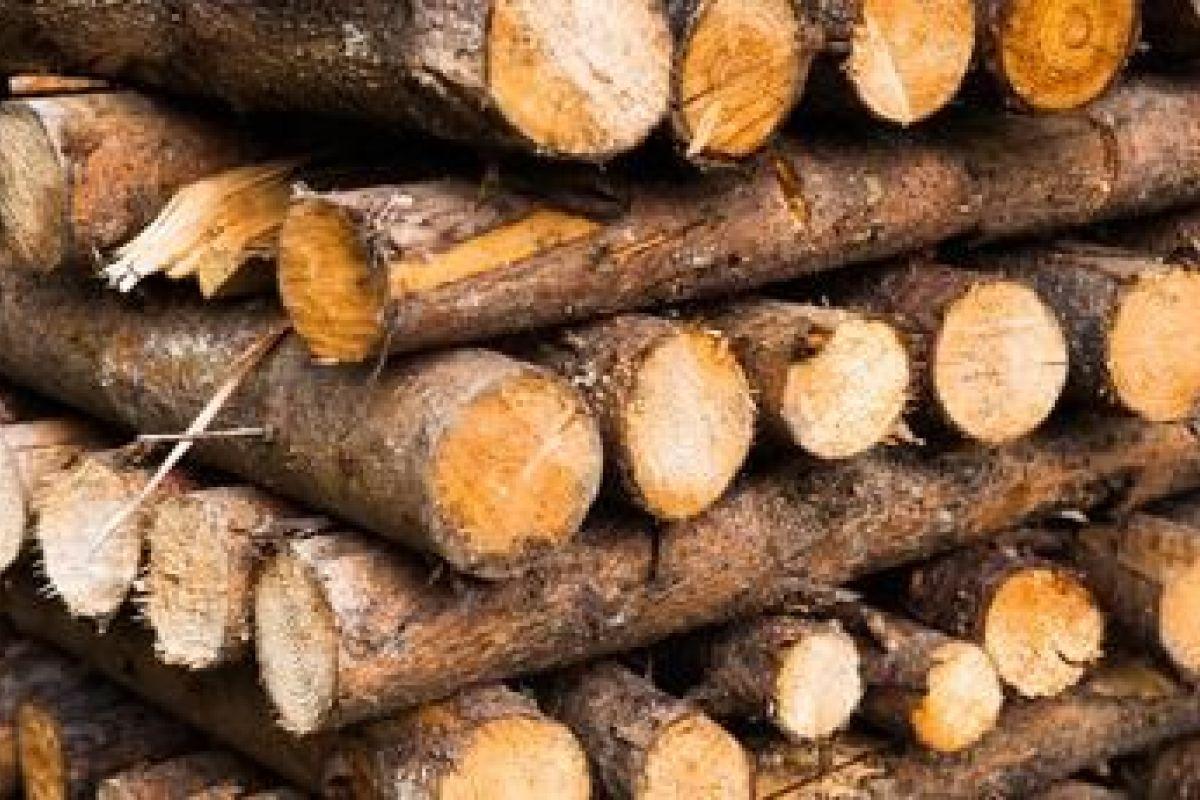 Quand Acheter Son Bois De Chauffage quel bois utiliser dans une cheminée ?