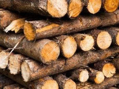 Quel bois utiliser dans une cheminée ?