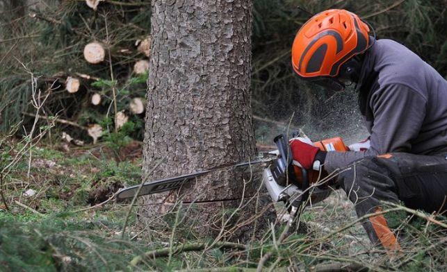 Quel prix pour l'abattage d'un arbre ? Tarifs [annee]
