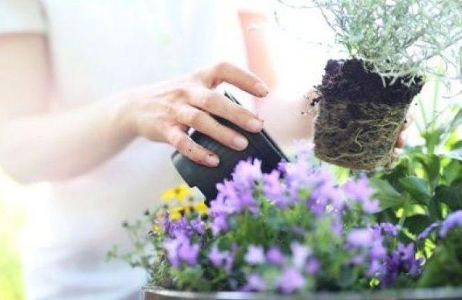 Quelle terre choisir pour vos jardinières ?