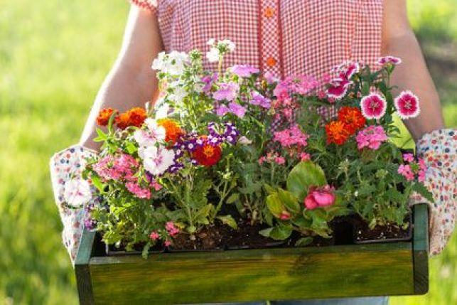 Quelles fleurs peut-on mettre en jardinière ?