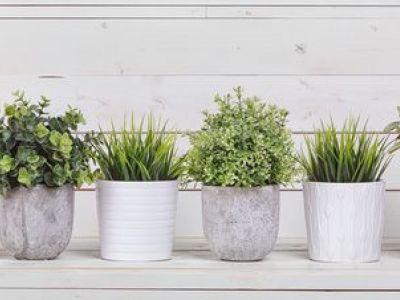 Quelles plantes installer dans la véranda ?