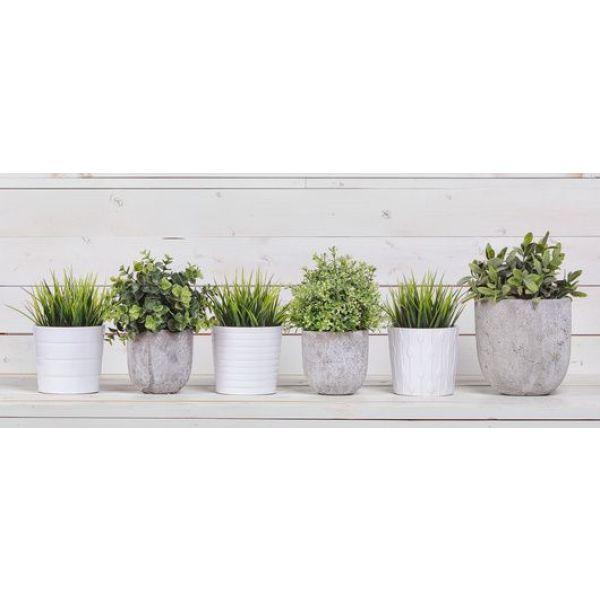 quelles plantes installer dans la v randa. Black Bedroom Furniture Sets. Home Design Ideas