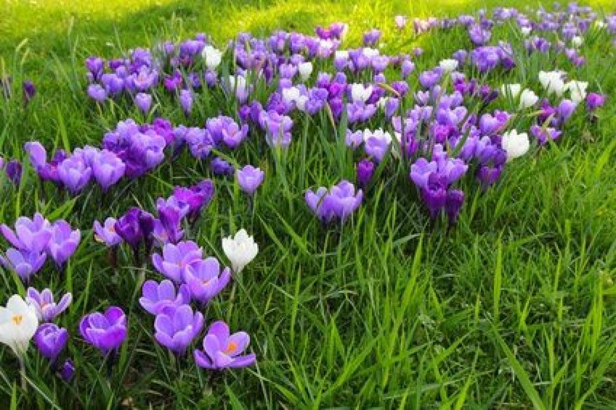 Image De Parterre De Fleurs réaliser un parterre de fleurs