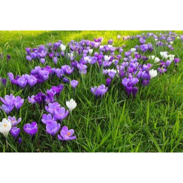 R aliser un parterre de fleurs for Parterre de fleurs