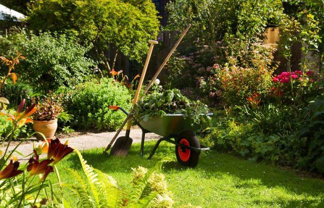 Redonner vie à un jardin en friche