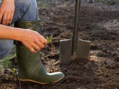 Semer du gazon : la préparation du sol
