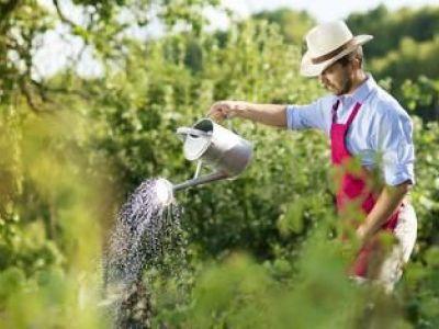Tarif d'intervention d'un paysagiste