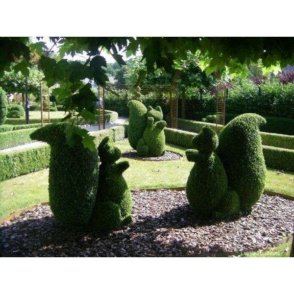 Tout savoir sur l\'art topiaire et la sculpture végétale