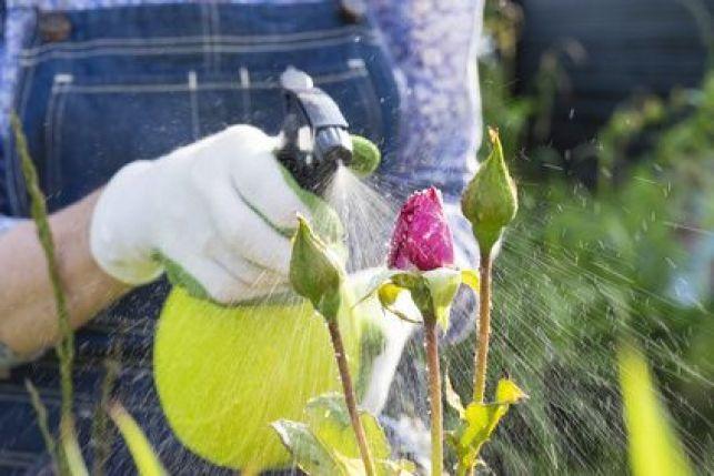 Traiter un jardin avec des insecticides : efficace mais non sans risques !