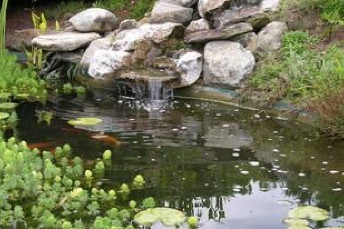 Bassin Préformé Hors Sol un bassin d'ornement pour votre jardin : relaxant, reposant