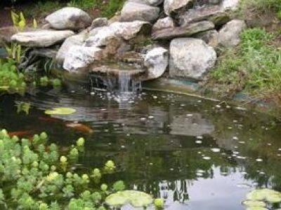 Un bassin d'ornement pour votre jardin
