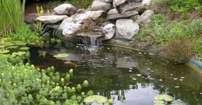 Un bassin d'ornement pour votre jardin, avec verdure et cascade