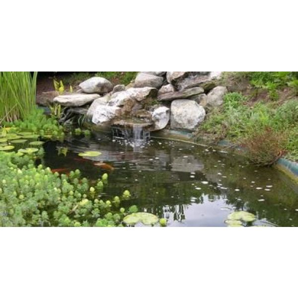 Un Bassin De Jardin Avec Cascade