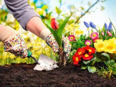 Un jardin d'agrément bio diversifié