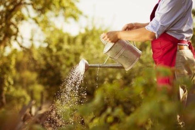 Un jardin d'agrément éco-responsable
