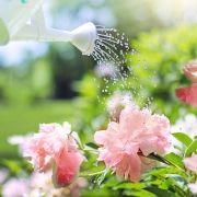 Jardin parfumé : les variétés de fleurs odorantes et parfumées
